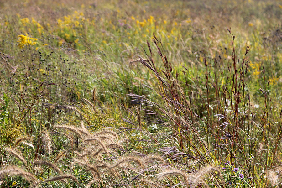 Fall prairie at Jay Woods